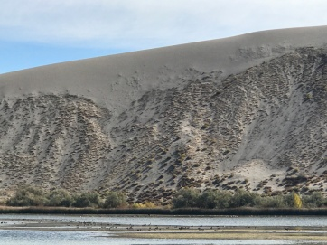this is the daddy dune. Plants have grown into it